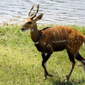 Safari Animals - Tongole Wilderness Lodge