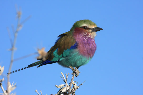 Safari Birds - Tongole Wilderness Lodge