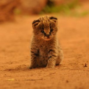 Animals Malawi Safari - Tongole Wilderness Lodge