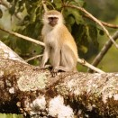 Animals in the wilderness - Tongole Wilderness Lodge