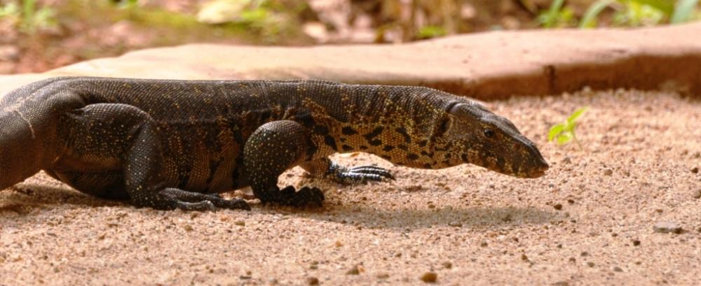 Malawi Safari Animals - Tongole Wilderness Lodge