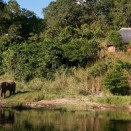 Elephants outside the chalet - Tongole Wilderness Lodge