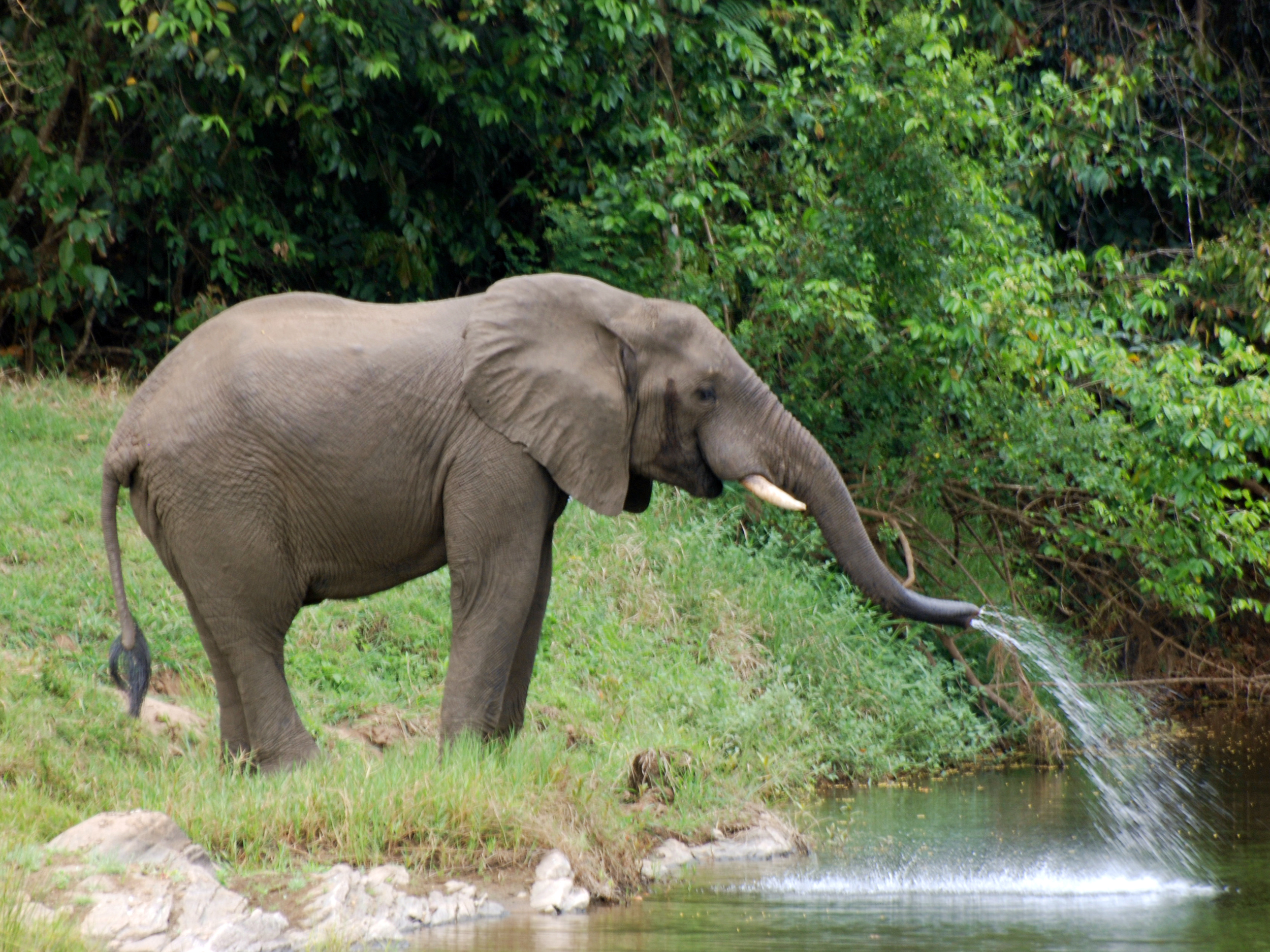 Wilderness Safari Elephant - Tongole Wilderness Lodge
