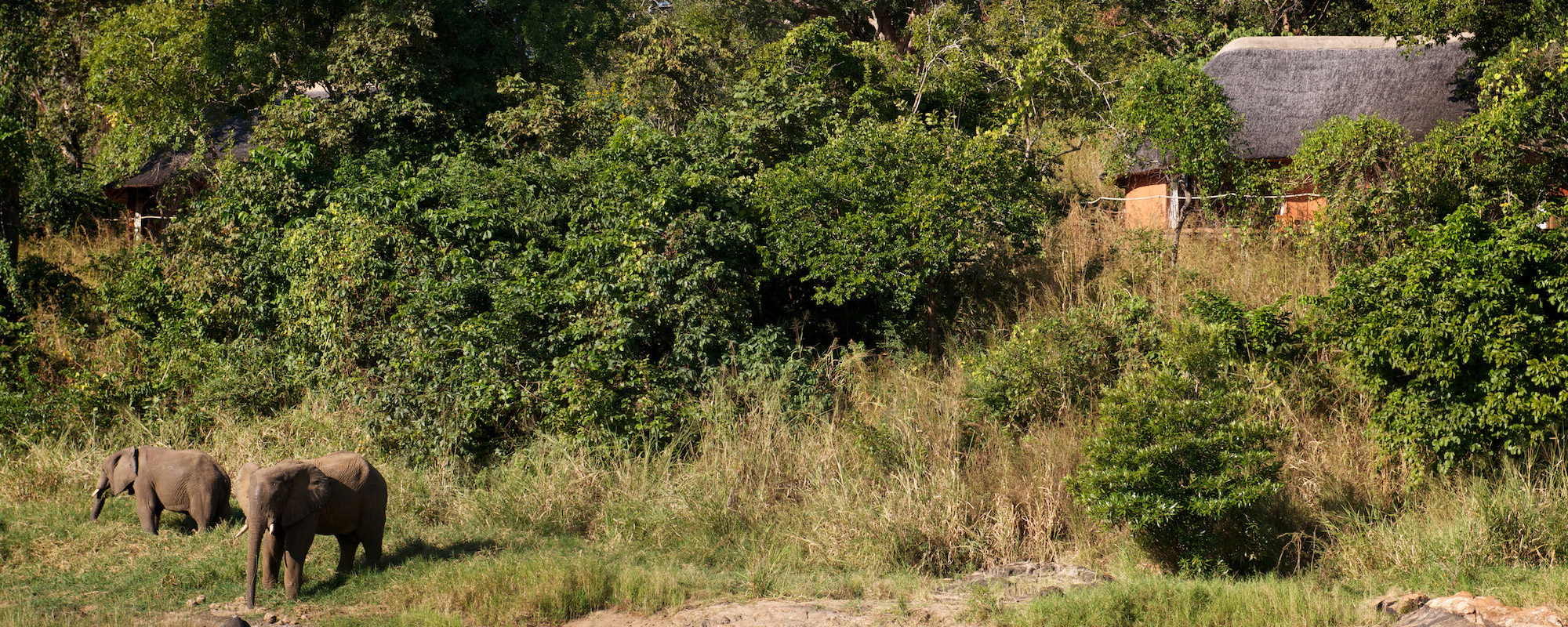 Tongole Wilderness Lodge - Wilderness Malawi Safari Elephants