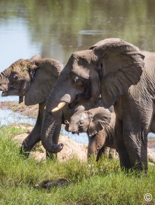 #elesnewhome, 500 elephants translocated in Malawi