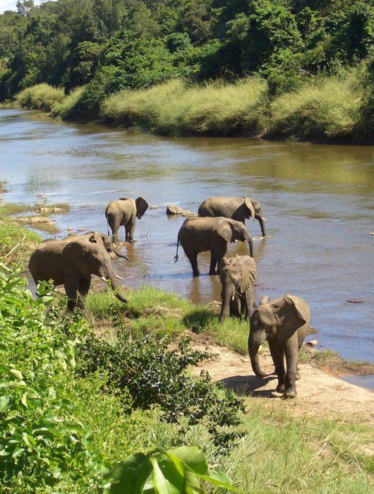 Animals free to visit Tongole