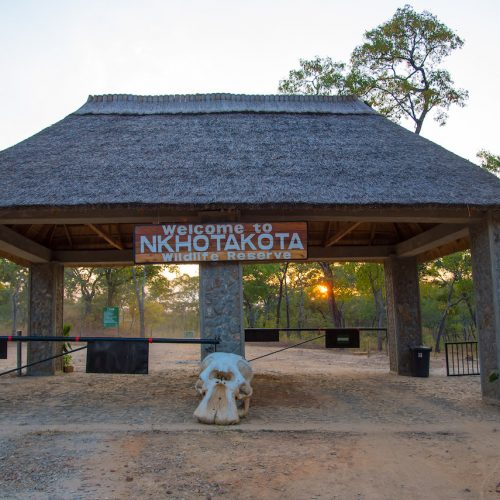 African Parks to manage Nkhotakota Wildlife Reserve, investing $18m in first 5 years
